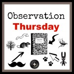 Observation Thursday